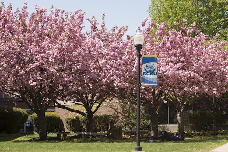 pink trees and SCSU banner on a lightpole